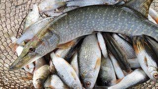 Бесплатная рыбалка в мурманске