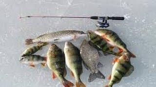Русская рыбалка москва центр красноперка турнир